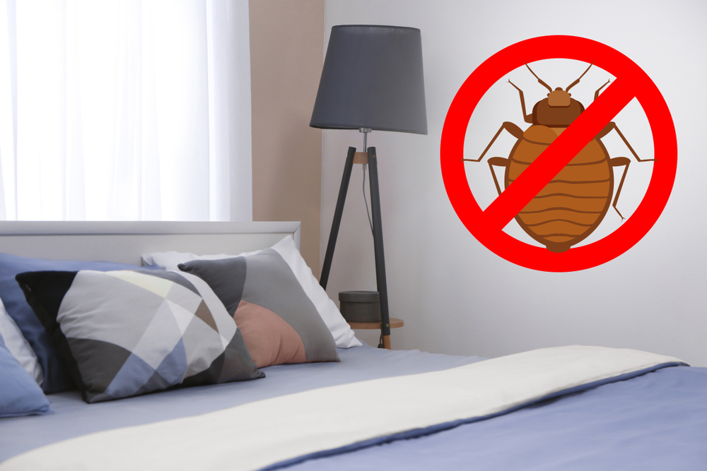 How Do You Prevent an Infestation?